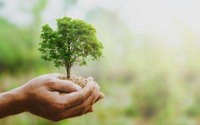 Eine Baumspende: Eine Baumspende für die Umwelt